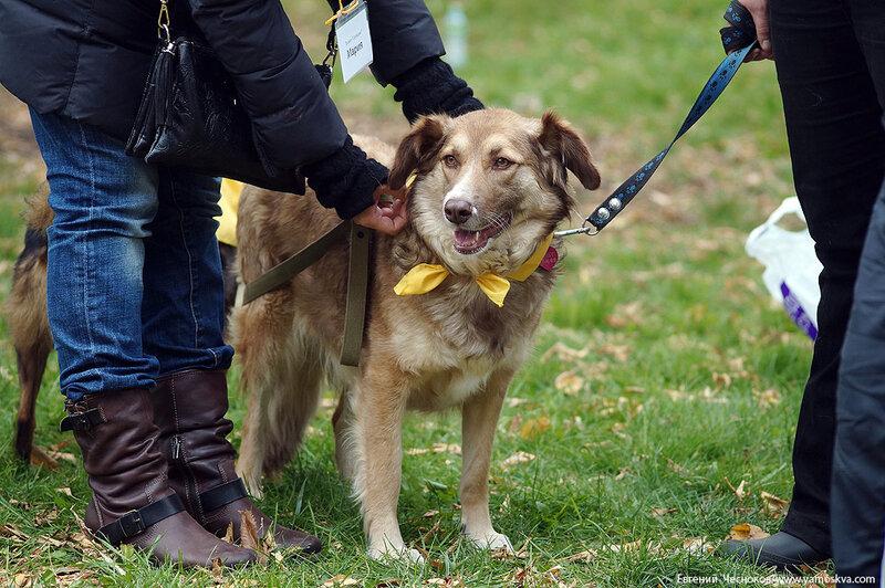 Осень. Фестивальный парк. Собаки. 04.10.14.04..jpg