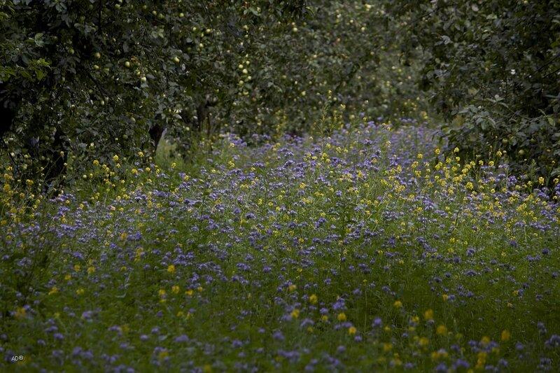 Ясная поляна