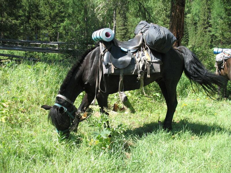 Лошадь, на которой я ехала