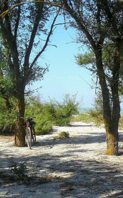 У дерева, скромно, под аркой ветвей ...SAM_3219-1.JPG