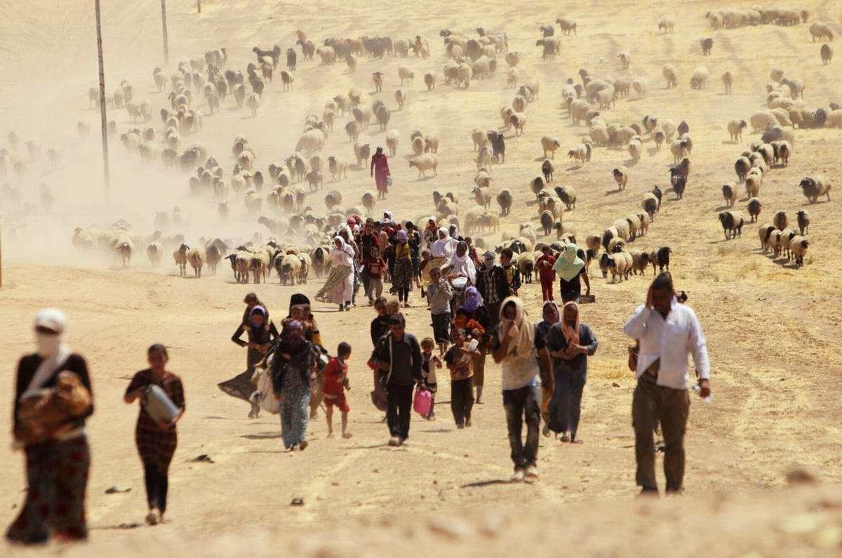 Общий вид групп беженцев и их скота, которые движутся в сторону иракско-сирийской границы
