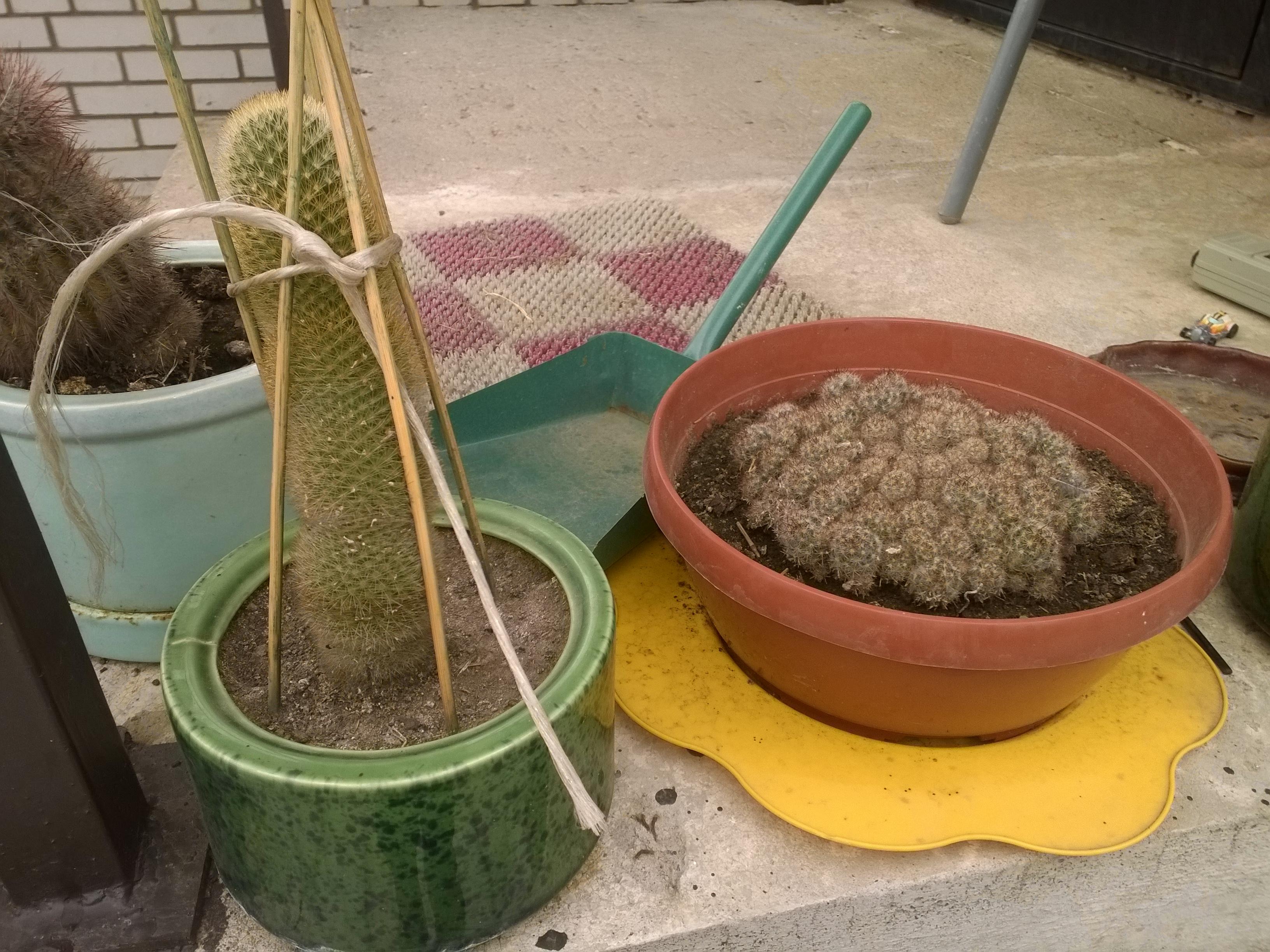 Ларисины кактусы (10).jpg