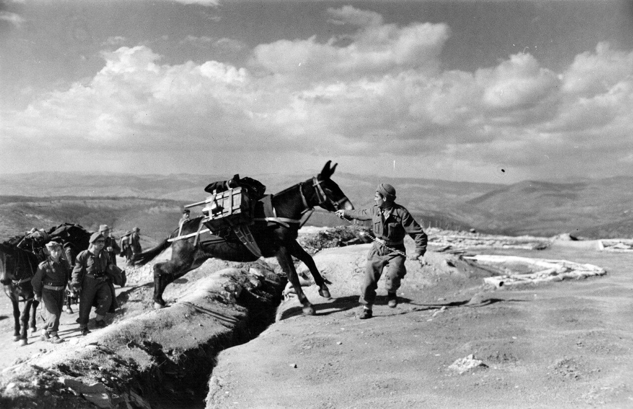 1948. Мул несет боеприпасы в Пападес, Эвбея