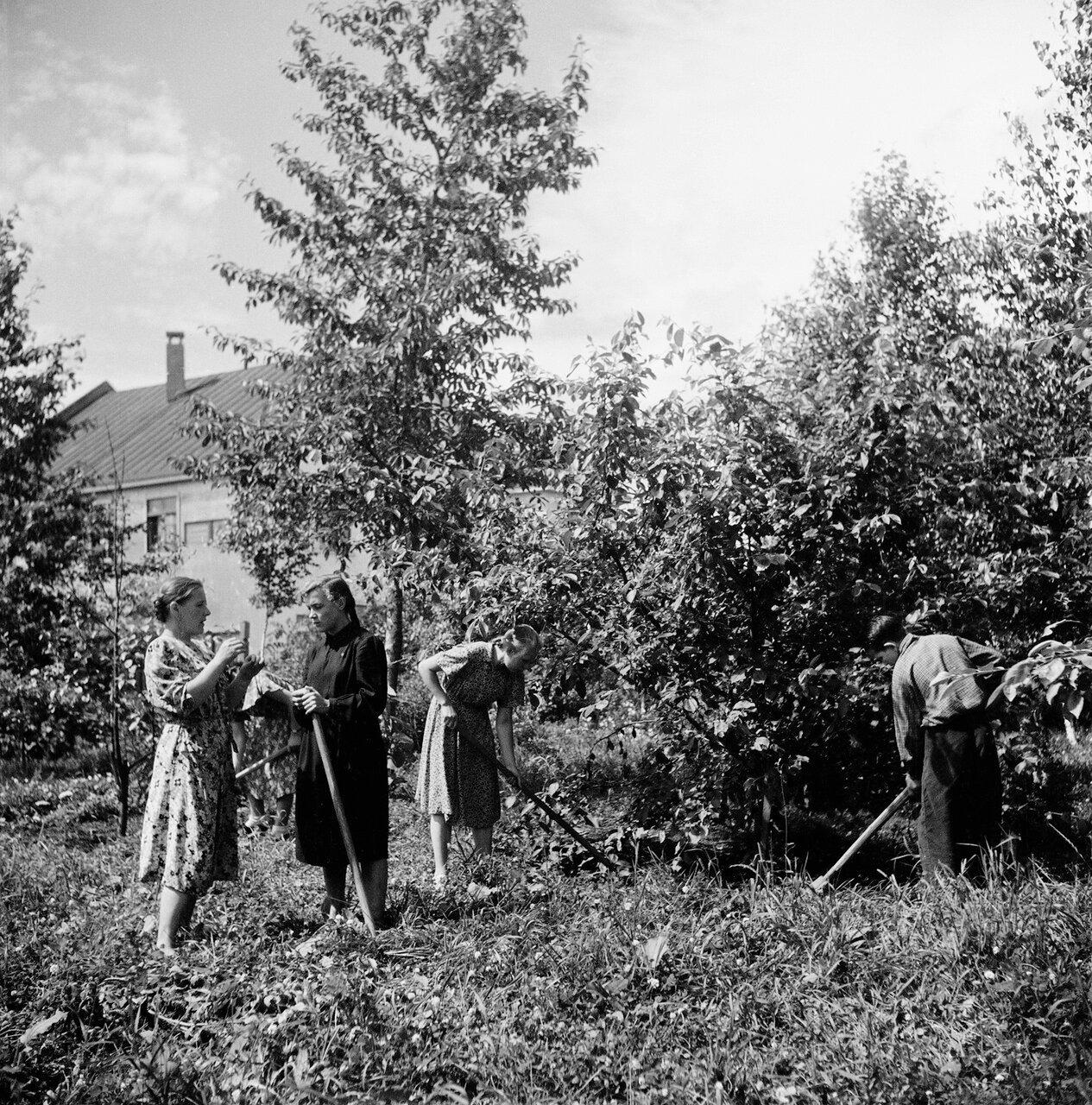 Школьники сажают плодовые деревья