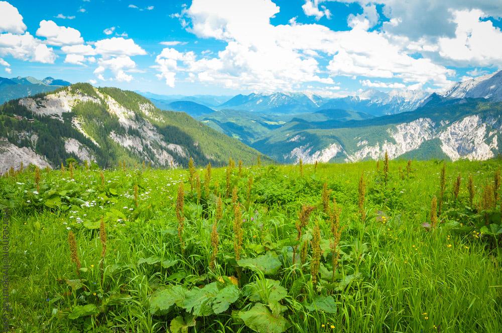 Alpspitze-(23).jpg