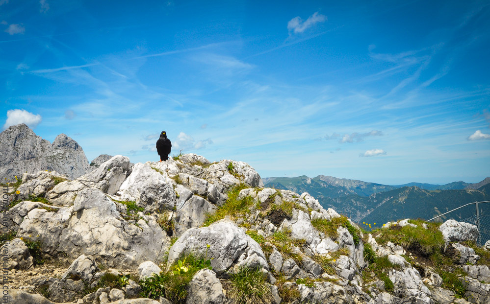 Alpspitze-(40).jpg