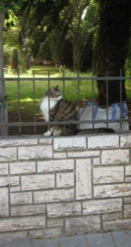 Израиль, кот