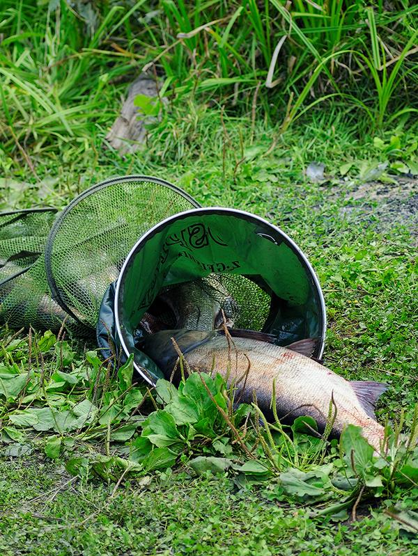 прогноз клева рыбы пензенская область с урлейка