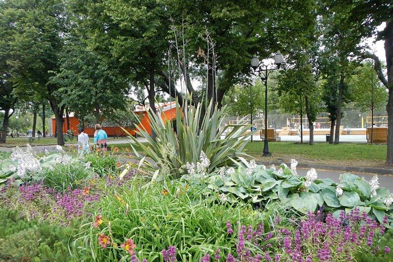 Тропическое растение на клумбе в парке им. Горького