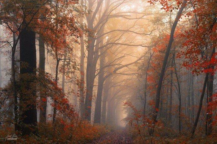 Колдовской лес
