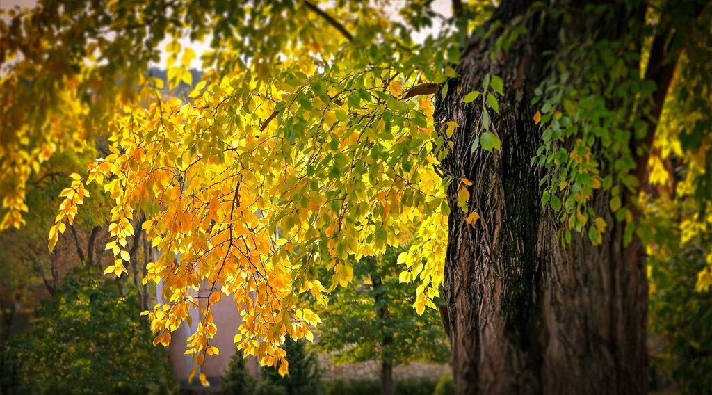 Осени цветное облаченье