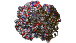 1C7D-DEOXY RHB1.2 (RECOMBINANT HEMOGLOBIN)-8.png