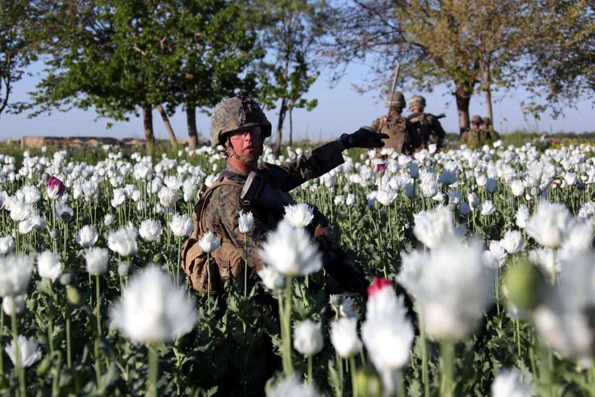 Посреди маковых полей Афганистана - фотографии военнослужащих корпуса морской пехоты США (5)