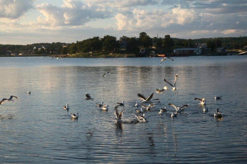 Лето, море, чайки