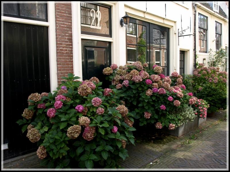 holland1 193.jpg