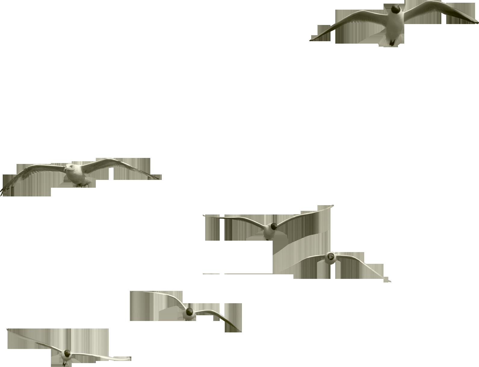 Картинки летящий лебедь