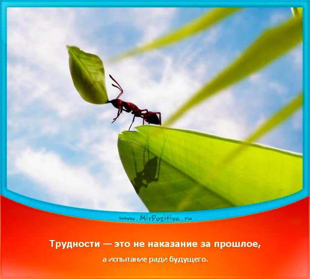 позитивчик дня: Трудности - это не наказание за прошлое, а испытание ради будущего.