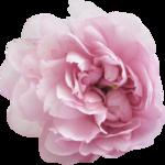 bee_floral_el5.png