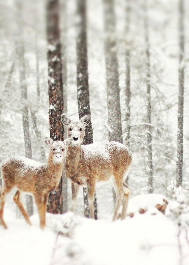 100 самых красивых зимних фотографии: пейзажи, звери и вообще 0 10f5cf cfc869c6 orig