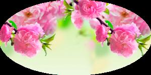 Схема-Цветение сакуры.png