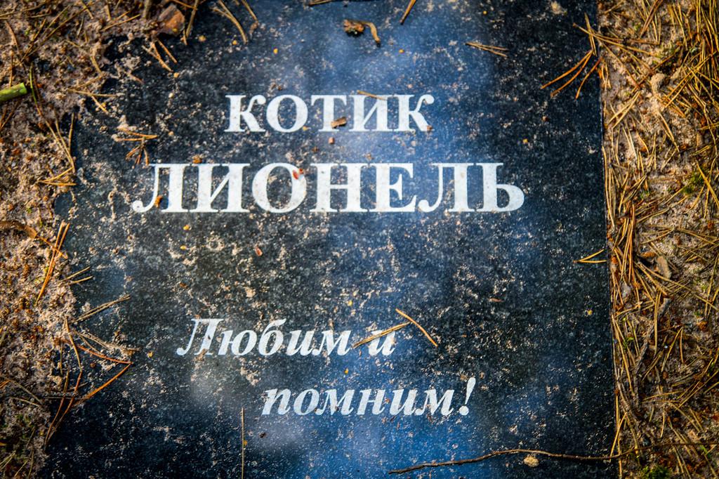 5. Притом большинство хозяев не скупятся на надгробия. Понятно, что выбить на граните имя питомца не