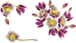 цветы весенние.png