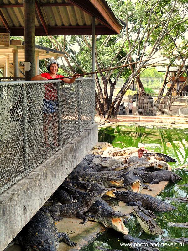7. А в Парке Миллионолетних Каменей и Крокодиловой Ферме (The Million Years Stone Park & Pattaya Crocodile Farm) можно половить на удочку огромных рептилий. Приманкой служит куриная тушка.