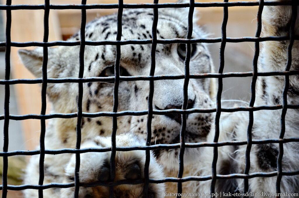Как ухаживают за хищниками. Московский зоопарк