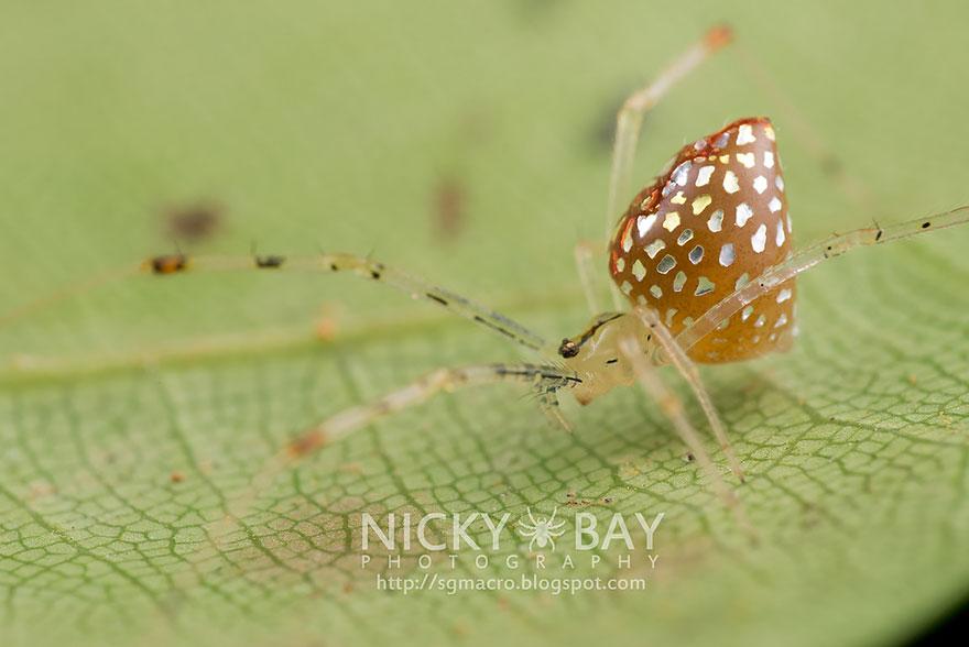 Необычные пауки