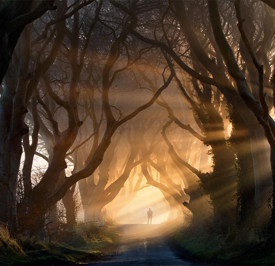 Живой тоннель из буков близ деревушки Странокум (Ирландия)