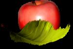 MRD_LOTD_apple-leaf-sh.png