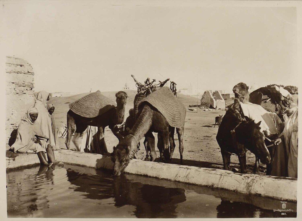 Тунис. Оазис. 1904