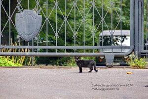Караульный котэ. Светлогорск-Rauschen