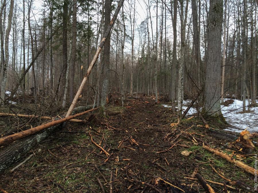лесная тропинка вырубленных деревьев