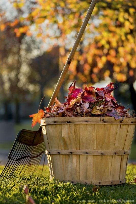 Сентябрь - основные работы в сентябре-Опавшие листья в саду