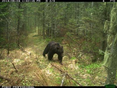 фотография медведя