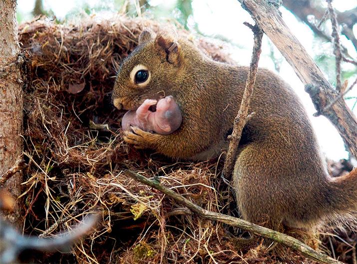 Фото «Что значит быть родителем?»