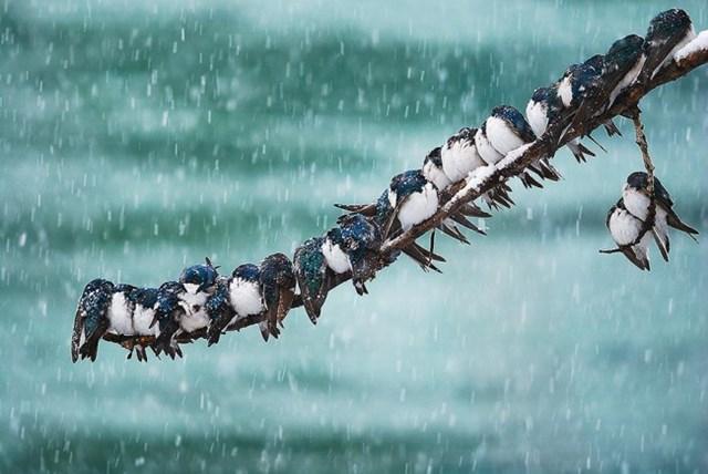 100 самых красивых зимних фотографии: пейзажи, звери и вообще 0 10f5d7 98b6b200 orig
