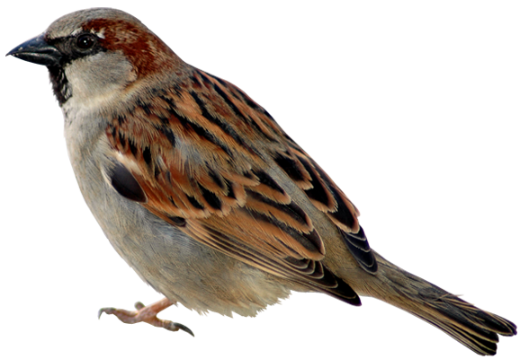nb_np_sparrow.png