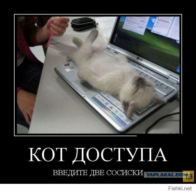 04 Кот доступа.jpg