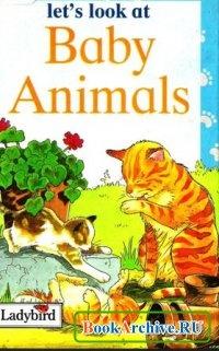 Книга Baby Animals.