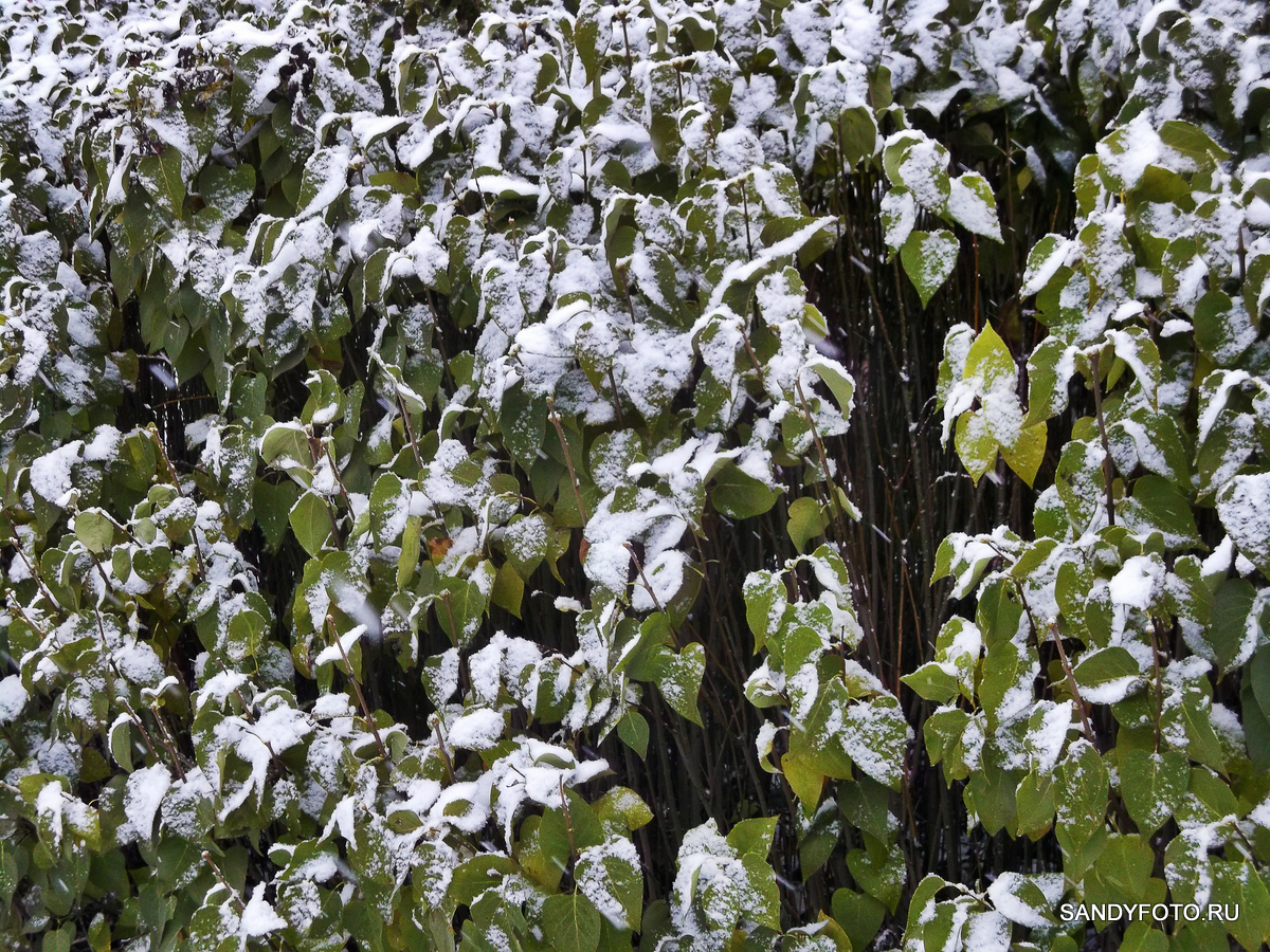 Первый снег в Троицке