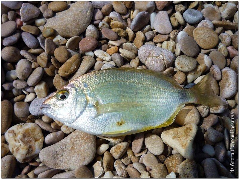 Картинка рыбалка подледка прикол жирность