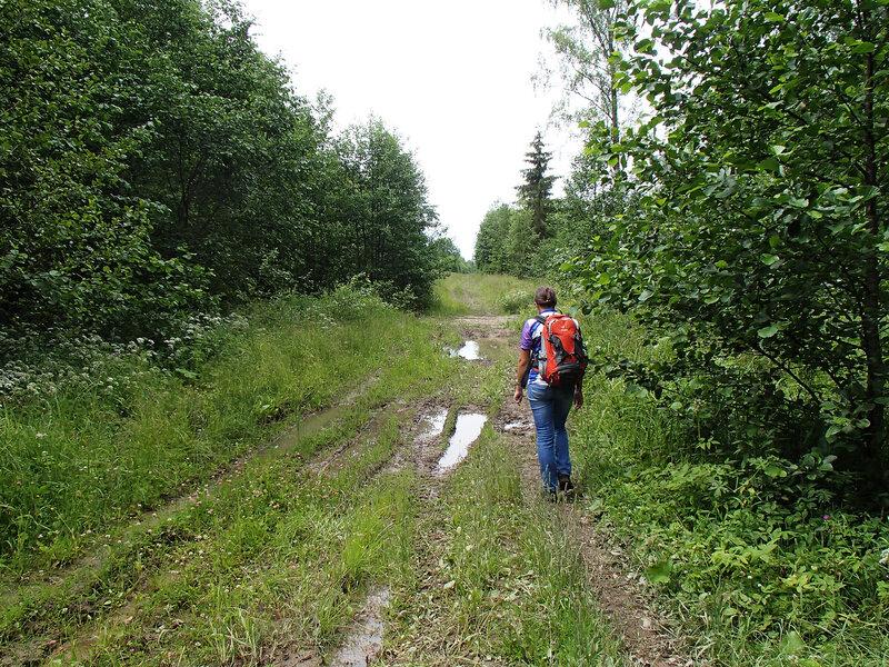 дорога от станции Чаща на мшинское болото и озеро Вялье