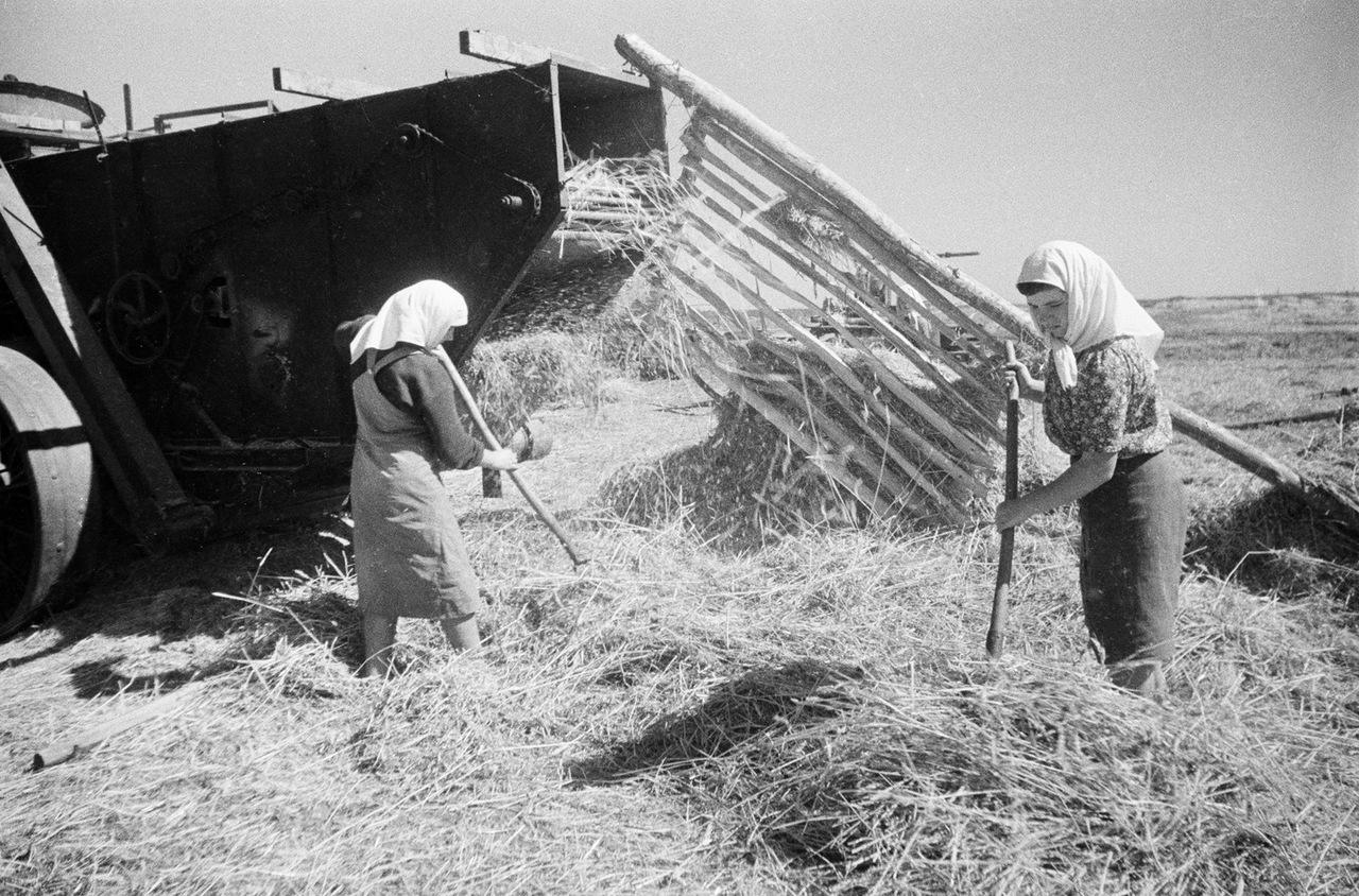 труд в колхозах ссср фото чипы