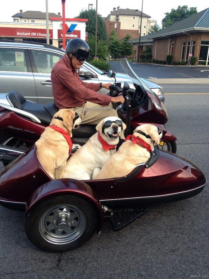 Собаки фото, часть 1 (100 картинок)