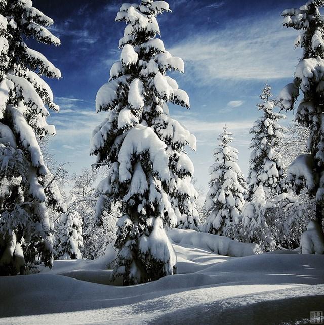 100 самых красивых зимних фотографии: пейзажи, звери и вообще 0 10f5ba 56438b86 orig
