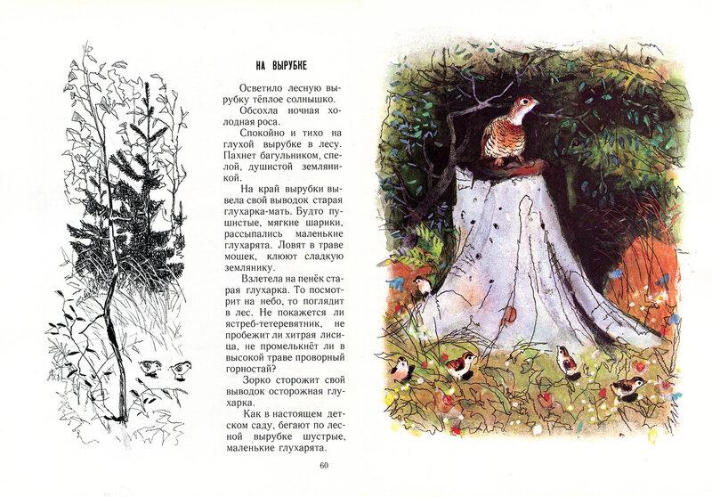 Лесные картинки и соколов-микитов