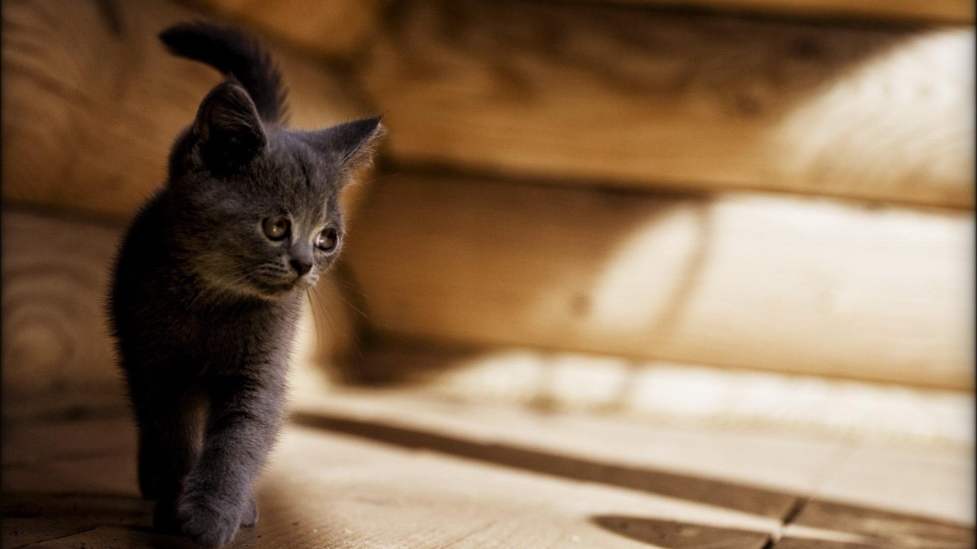 Котята обои на рабочий стол 1024х768