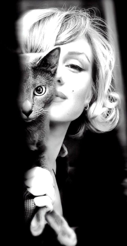 Мэрилин Монро с кошками